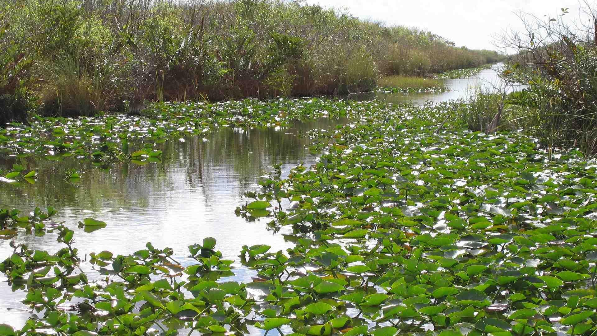 Everglades 226732 1920 resized