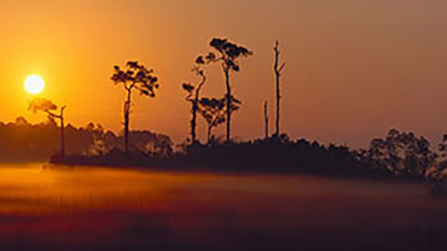 Everglades_National Parks | Everglades